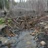 (2008-05) Beaver Fixes Road