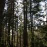 (2008-05) Through The Trees