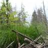 (2009-08) East Branch Of Beaver Brook 2